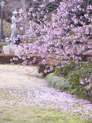 3月の花_27.JPG