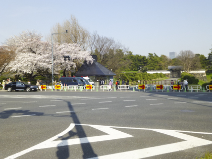 桜_8.JPG