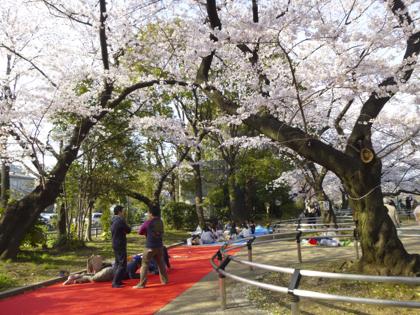 桜_19.JPG