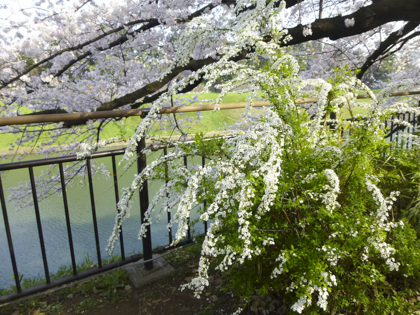 桜_20.JPG