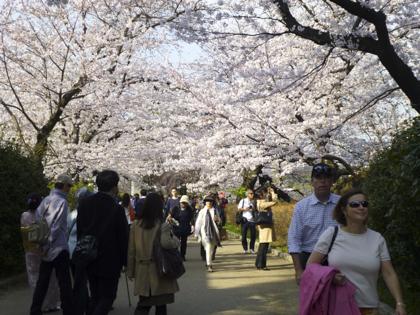 桜_21.JPG