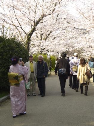 桜_22.JPG