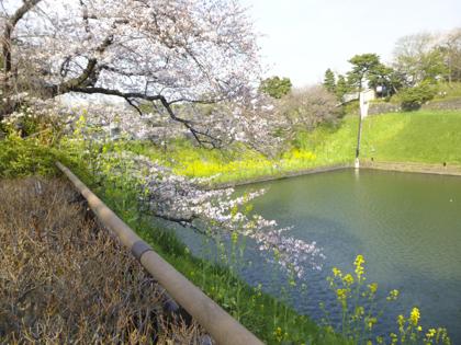 桜_24.JPG