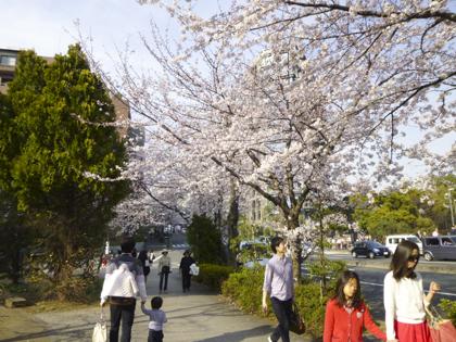 桜_28.JPG