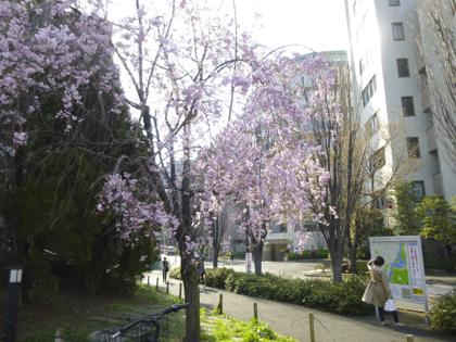 桜_29.JPG