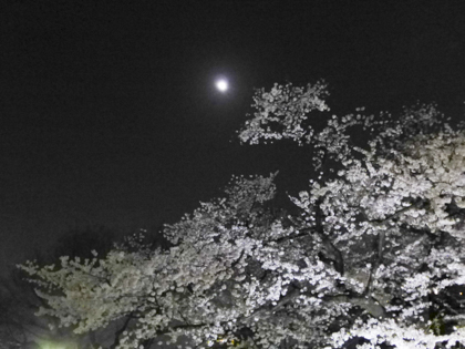 桜_31.JPG