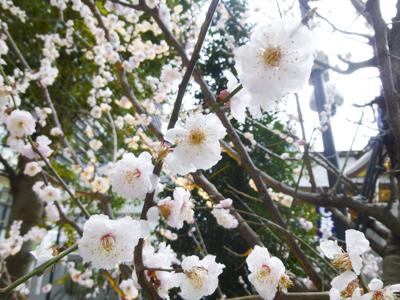 春_3.JPG