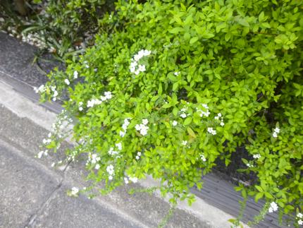 春_1.JPG