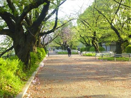 八重桜_11.JPG