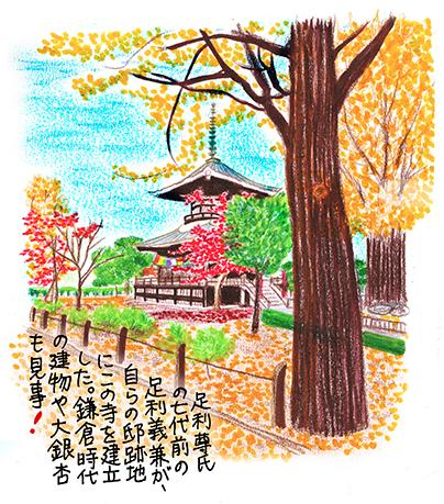 足利11_鑁阿寺境内イラスト.jpg
