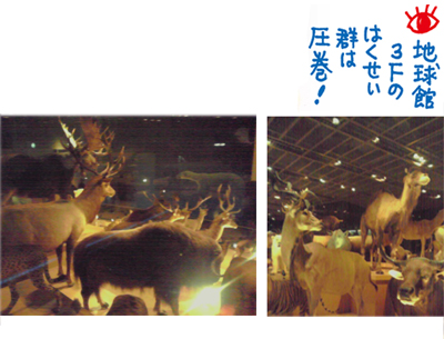 国立科学博6_はくせい館.jpg
