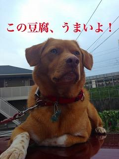 TIG  富士 美容院 看板犬