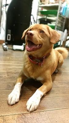 TIG 犬 5歳 雑種 MIX犬