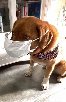 犬 花粉シーズン到来
