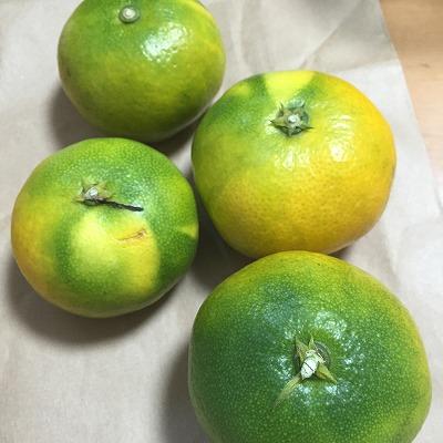 極早生みかん みかん 冬 果物 フルーツ