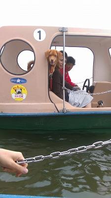 スワンボート 水上ボート グリンパ