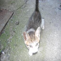 近所の子猫1