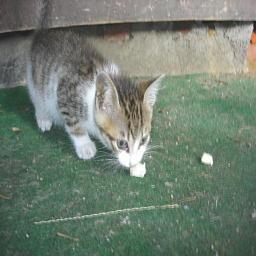 近所の子猫2