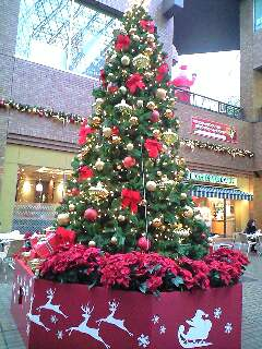 東京クリスマスイルミネーション2007@御茶ノ水サンクレール