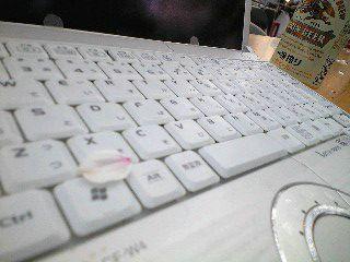 レッツノートと桜