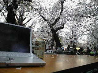 花見会場と桜とビールとレッツノート