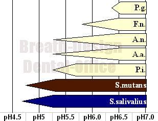 口腔内常在菌の生育可能pH域