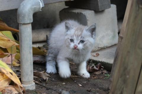 生まれたての仔猫