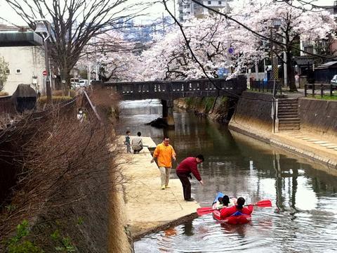 長岡 柿川 カヌー カヤック 花見