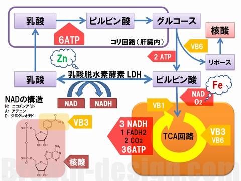 乳酸 NAD ナイアシン 核酸 ビタミンB