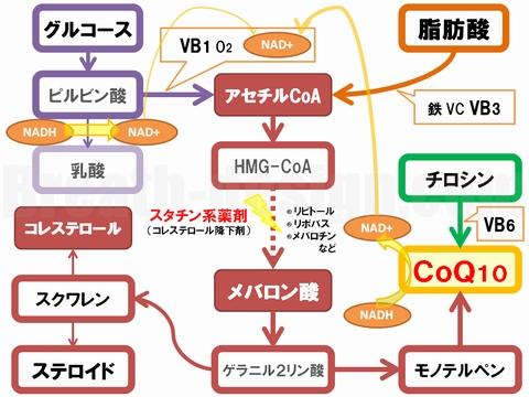 スタチン コレステロール CoQ10 コエンザイムQ10