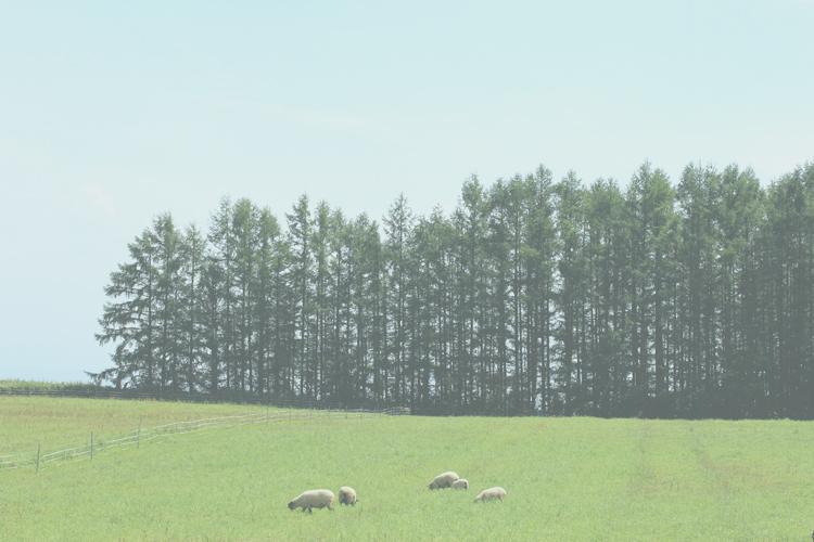 牧場のひつじ