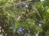 宿付近の山:見えにくいけど立派なクモの巣の図