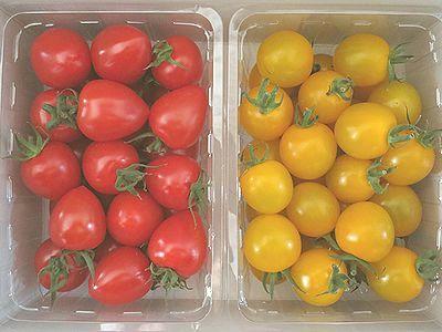 純愛トマト2
