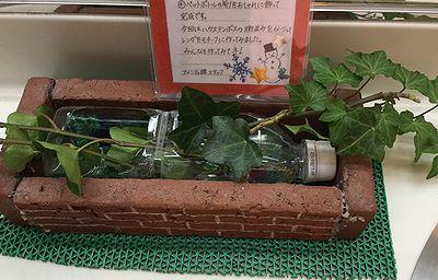 ペットボトルの水耕栽培2