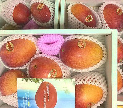 沖縄からマンゴ