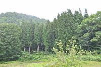 針広混合林