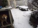 雪とシバ太郎☆