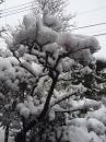 雪の木に…