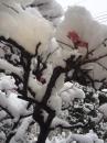 梅の花が…