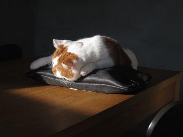 猫がティッシュを食べる?考えられる原因や対策と …