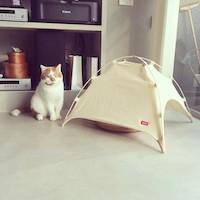 CAT STUDY HOUSE