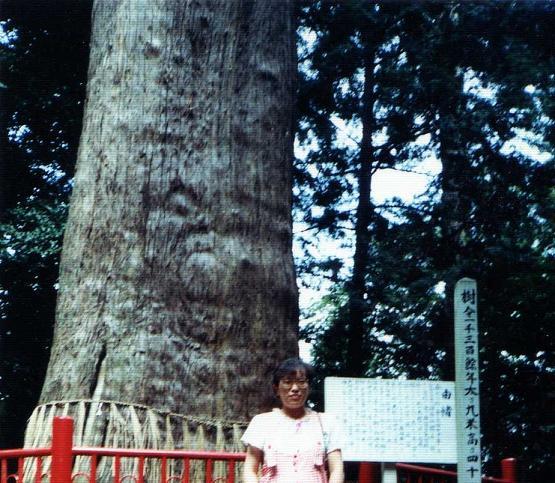 成田の人面木