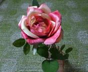内野さんからいただいたバラ