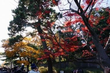 乾通りの紅葉