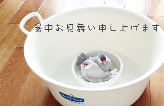 2015暑中お見舞い.jpg