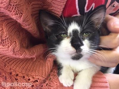 動物保護団体PONT保護猫さん