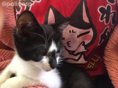 動物保護団体PONT保護猫さん2