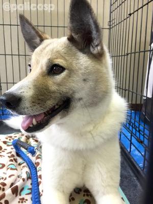 動物保護団体PONT保護犬コロ