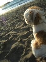 ラキタスと浜で