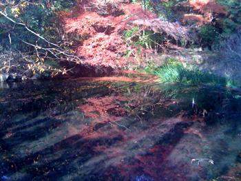 紅葉水面.jpg